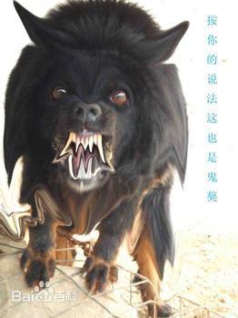 鬼獒咬死藏獒_鬼獒咬死狮子图片,鬼獒咬死藏獒视频录像,藏獒和鬼獒打架哪个 ...